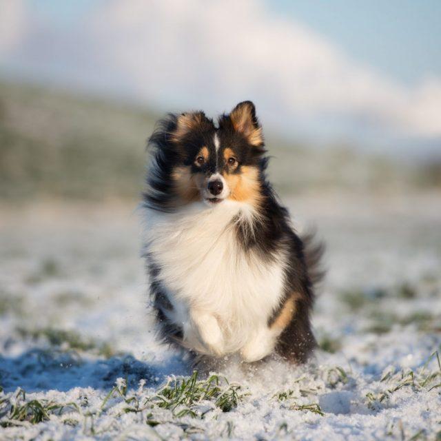 Få en sund hund og træning på gåturen