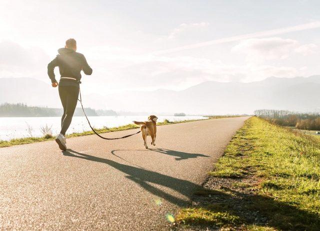 Canicross løb med hund MÆT Pets