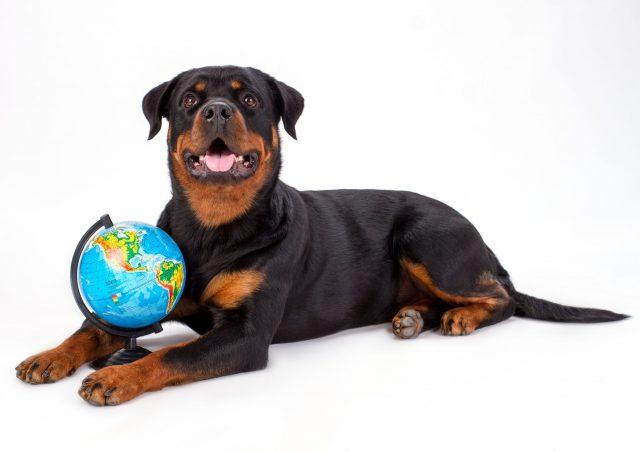 Udenlandske populære hundenavne
