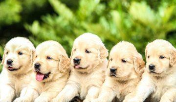 Populære hundenavne: Find det perfekte navn til din hvalp