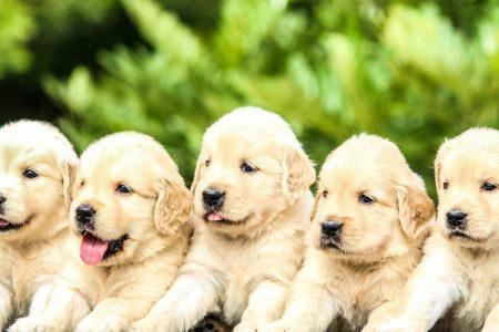 Populære hundenavne