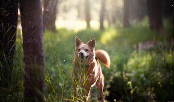 3 udvalgte hundeskove på Sjælland