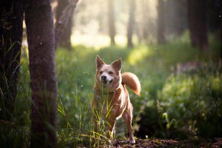 Hundeskove på Sjælland. Billede fra Cam Bowers. Mæt Pets