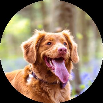 happy_dog_maet
