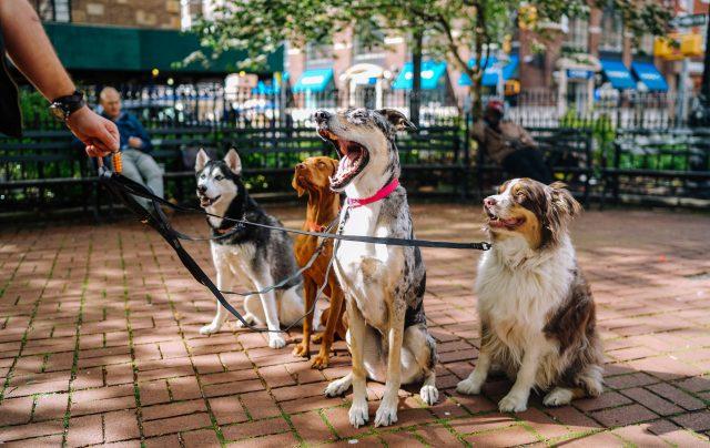 hunde med allergi racer
