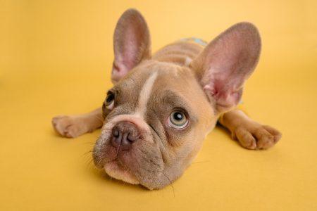 hunde med foelsom mave eller mave problemer