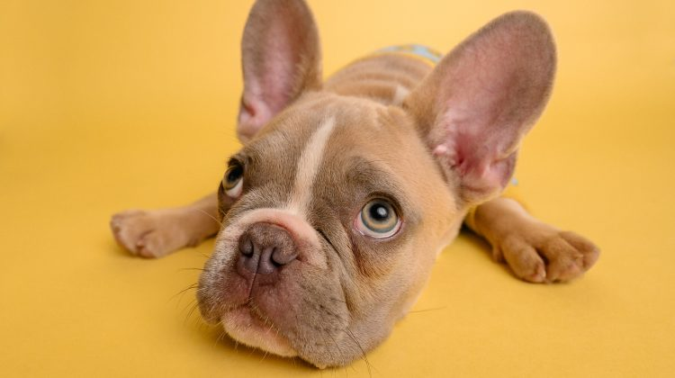 De 5 mest almindelige mave- og fordøjelsesproblemer hos hunde, og hvordan du løser dem