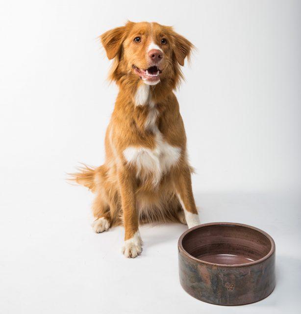 hunde allergi maet allergivenlig hundefoder