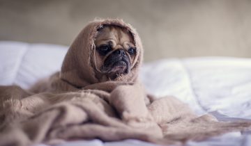 Tegn på at din hund har allergi og mulige løsninger