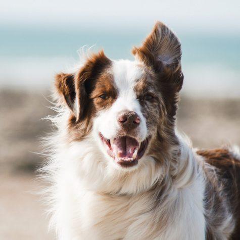 vegetarisk hundefoder mindre co2 udledning